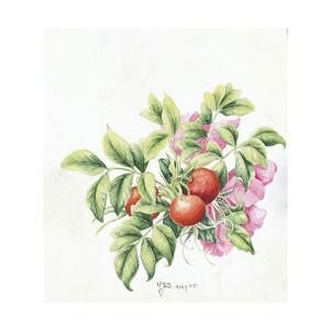 2007 Rose Hips by Janneke Brinkman-Salentijn