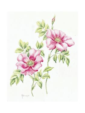 2007 Wild Roses by Janneke Brinkman-Salentijn
