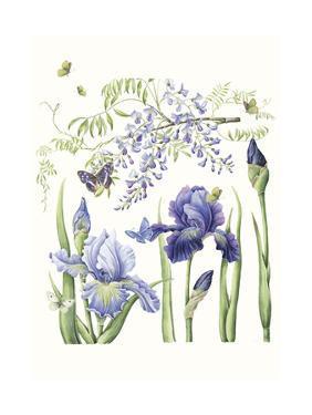 Iris & Wisteria by Janneke Brinkman-Salentijn
