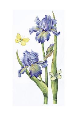 May Iris by Janneke Brinkman-Salentijn