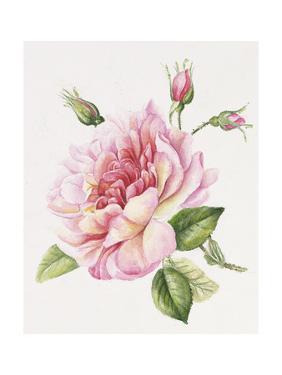 Single Rose 3 by Janneke Brinkman-Salentijn