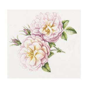 Single Rose 6 by Janneke Brinkman-Salentijn