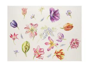 Tulip Pieces by Janneke Brinkman-Salentijn