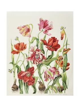 Tulips 1601 by Janneke Brinkman-Salentijn