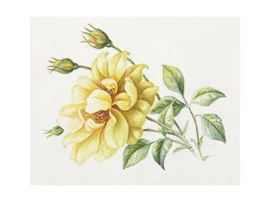 Yellow Rose 10 by Janneke Brinkman-Salentijn