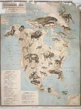 Map of Animals in North America by Janos Balint