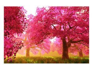 Japan Cherry Blossoms Garden