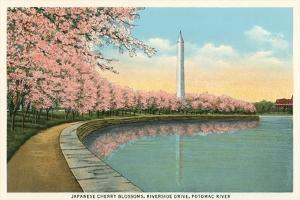 Japanese Cherry Blossoms, Riverside Drive