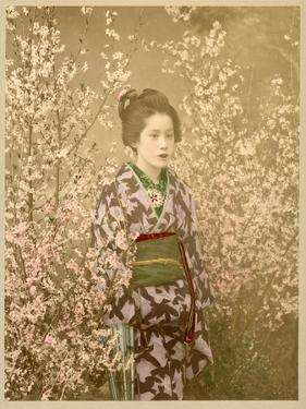 Japanese Girl Next to Cherry Blossom Tree