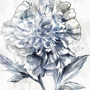 Japanese Peony II by Isabelle Z