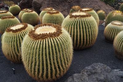 Magnificent Big Cactuses by Jarretera