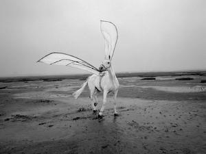 Pegasus 2 by Jaschi Klein