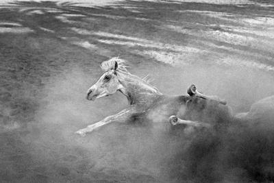 Pferd-Traum 1, 2015