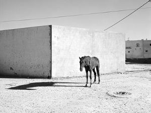 Pferd-Traum 5, 2015 by Jaschi Klein