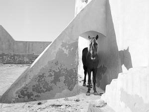 Pferd-Traum 7, 2015 by Jaschi Klein