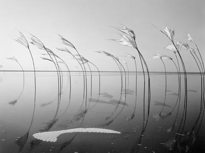 Wind-Installation I, 2015 by Jaschi Klein