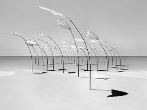 Windblumen 2 by Jaschi Klein