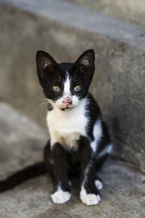 A Cute Street Cat Kitten Resting on the Sidewalk of an Island Town