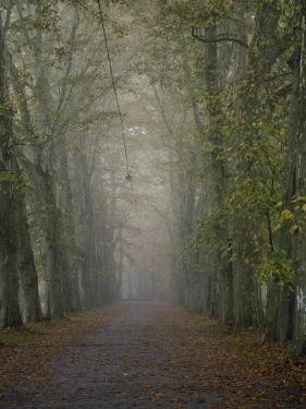 A Tree-Lined Road Disappears into the Fog by Jason Edwards