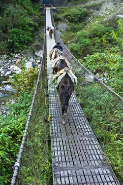 A Villager Crosses a Suspension Bridge Between Mountains with His Pack Mule Train by Jason Edwards