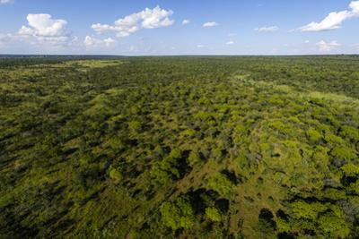 An Aerial View of an Open Woodland and Grassland on a Vast Plain by Jason Edwards