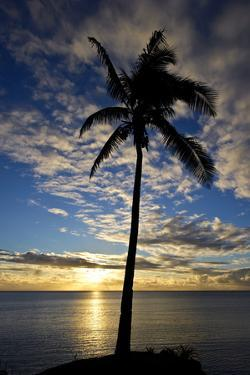 An Idyllic Palm Tree Silhouette Overlooking the Ocean at Sunset by Jason Edwards