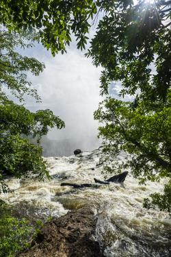 Beneath Overhanging Trees the Rapids and Currents of the Zambezi River Flow Along the Shoreline by Jason Edwards