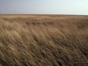 Hot Wind Howls over the Vast Savannah Grasslands of East Africa, Serengetti, Tanzania by Jason Edwards