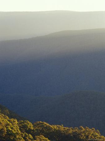 Mountain Haze and Snow Gum Eucalyptus Tree Canopies at Sunset, Australia by Jason Edwards