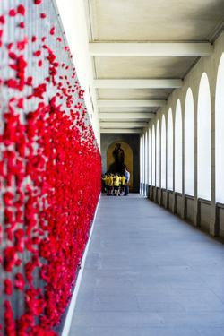 School Children View the Roll of Honour Where Fallen Soldiers are Remembered with Red Poppies by Jason Edwards