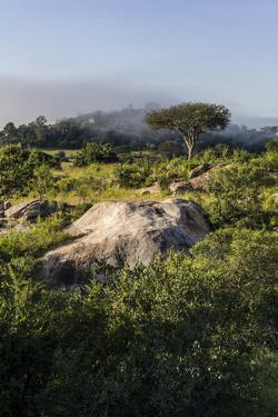 Shrubs, Acacia Trees, Evergreen Forest and Mist Shroud Granite Kopjes Above the Savannah by Jason Edwards