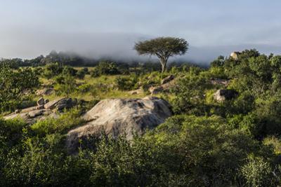 Shrubs, Acacia Trees, Evergreen Forest and Mist Shroud Granite Kopjes Above the Savannah by Jason Edwards