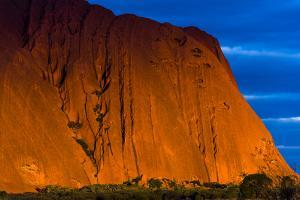 Sunset Light in the Folds and Fissures of the Blood Red Sandstone of Uluru on the Desert Plain by Jason Edwards