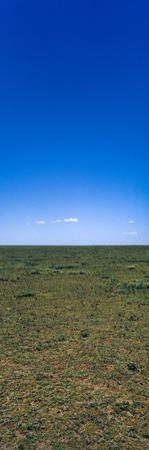 The Vast and Featureless Short Grass Savannah Plain Beneath a Clear Blue Sky by Jason Edwards