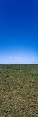 The Vast and Featureless Short Grass Savannah Plain Beneath a Clear Blue Sky by Jason Edwards