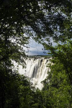 The View of Victoria Falls Through a Rainforest Canopy as it Plunges into the Cataract by Jason Edwards