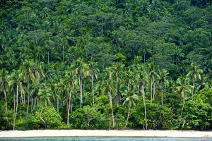 Tropical Rainforest and Palm Trees Line a Beach on a Deserted Island by Jason Edwards