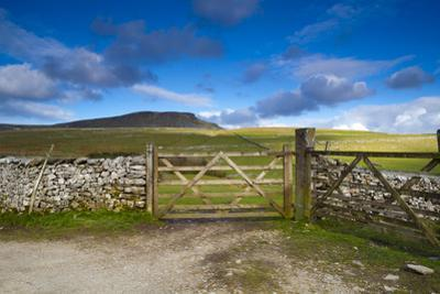 Gates to Farm Field and Pen-Y-Ghent in Distance, Yorkshire Dales National Park, North Yorkshire, En