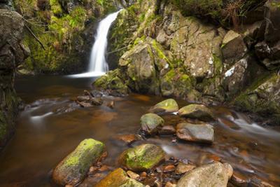 Harthope Linn, Harthope Valley, Northumberland National Park, Northumberland, England