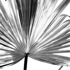 Black and White Palms III by Jason Johnson