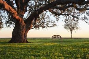 A Grand Oak Tree Overhangs a Lone Bench at Sunset. by Jason Langley