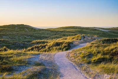 Netherlands, North Holland, Julianadorp. Walking path through the dunes at sunset. by Jason Langley