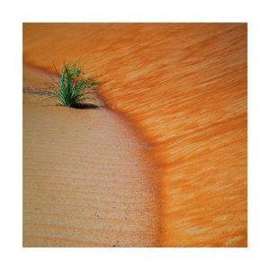 Liwa Sands s-curve square by Jason Matias