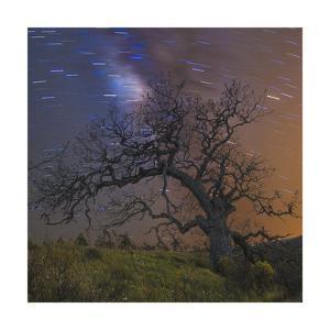 Lonesome Tree Square by Jason Matias