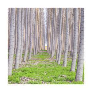 Poplar Forest Square by Jason Matias