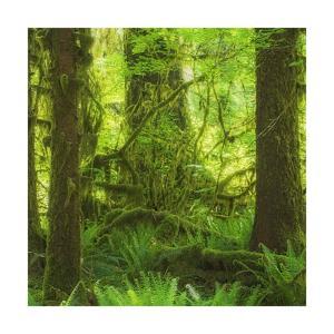 Rainforest Square by Jason Matias