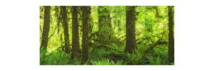 Rainforest by Jason Matias