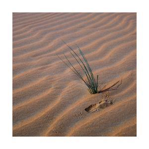 Sands With Green Grass Sprout Square by Jason Matias