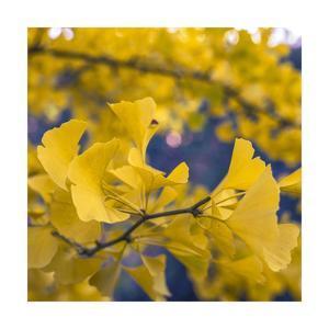 Yellow by Jason Matias