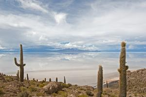 Cardon Cactus at Isla De Pescado, Bolivia by javarman